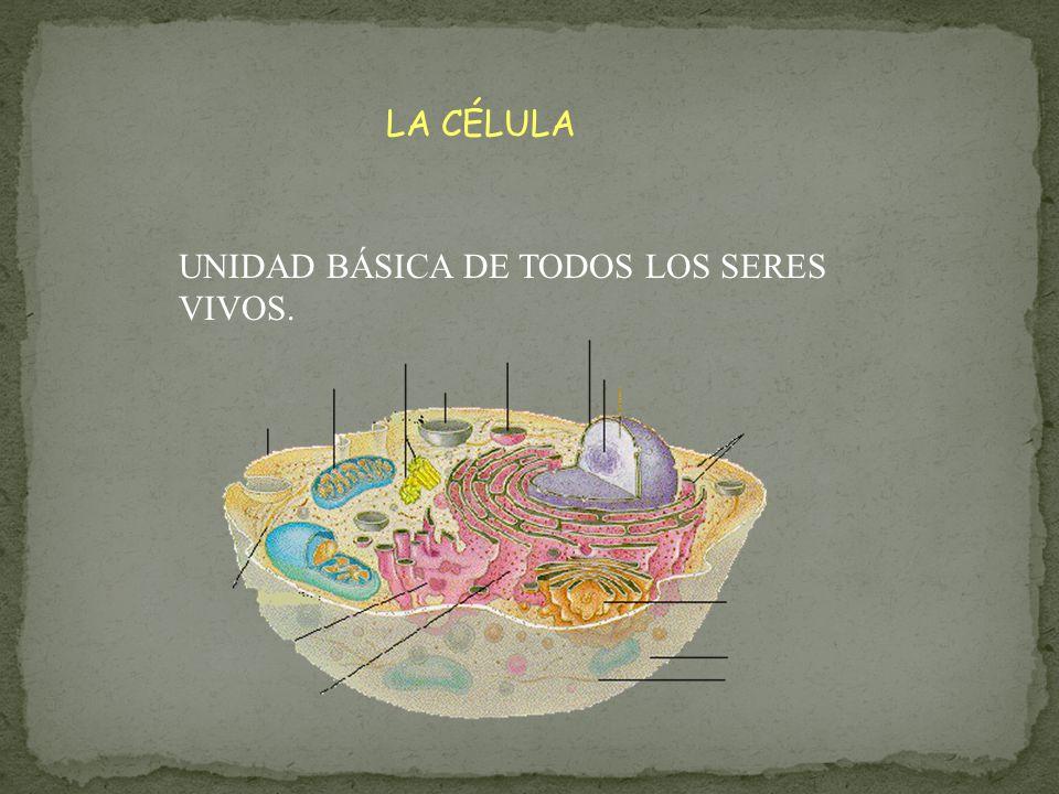 LA CÉLULA UNIDAD BÁSICA DE TODOS LOS SERES VIVOS.