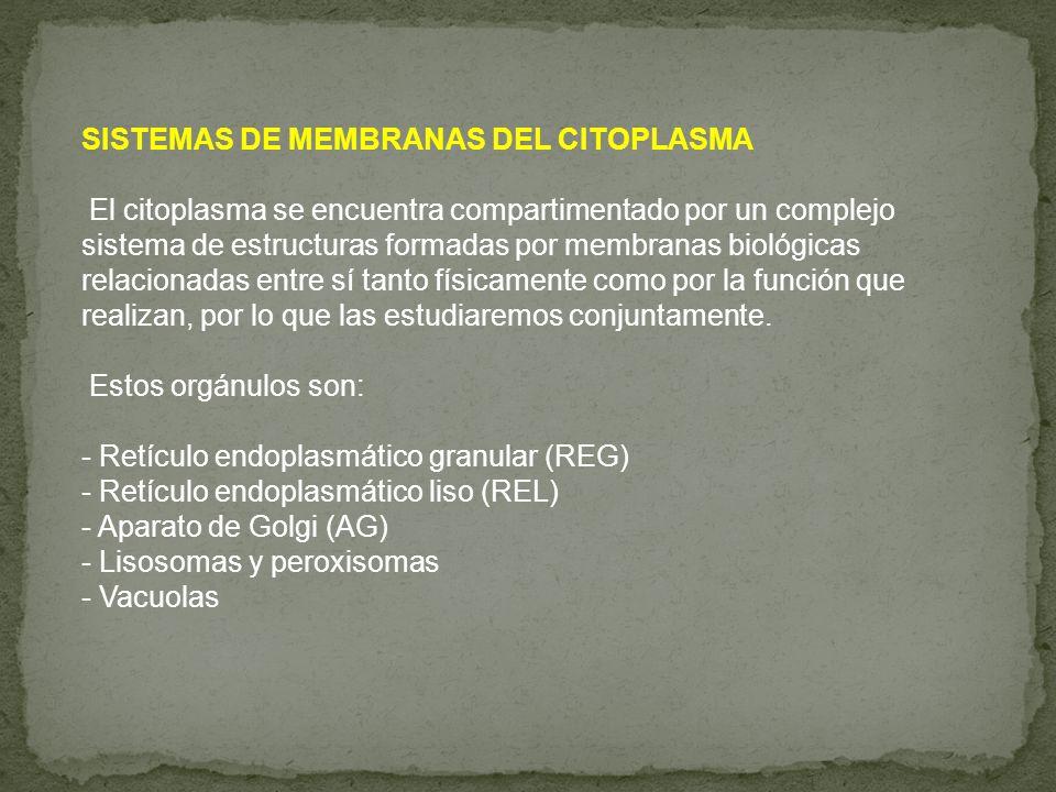 SISTEMAS DE MEMBRANAS DEL CITOPLASMA