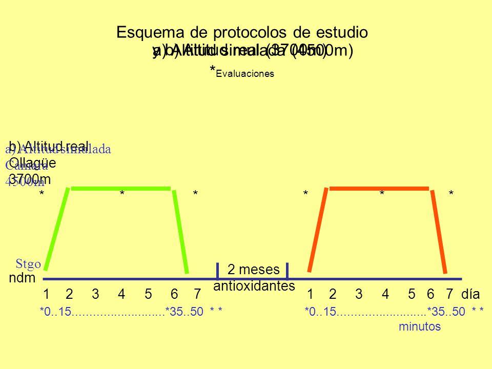 Esquema de protocolos de estudio *Evaluaciones