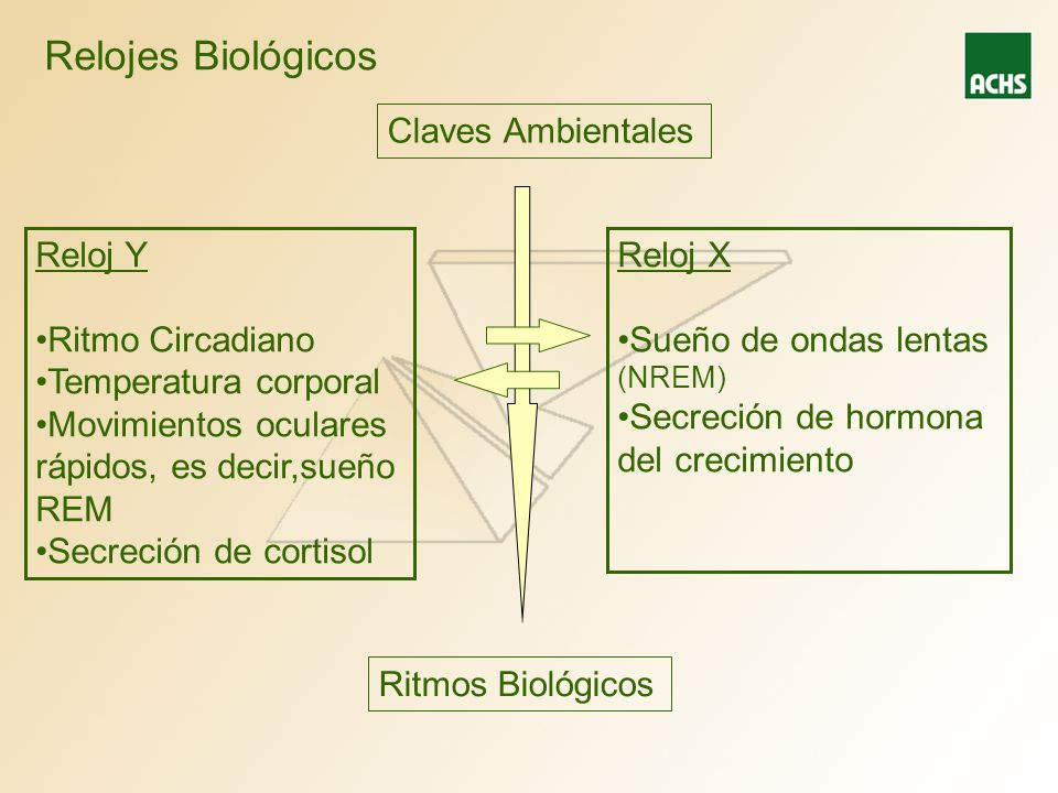 Relojes Biológicos Reloj Y Ritmo Circadiano Temperatura corporal