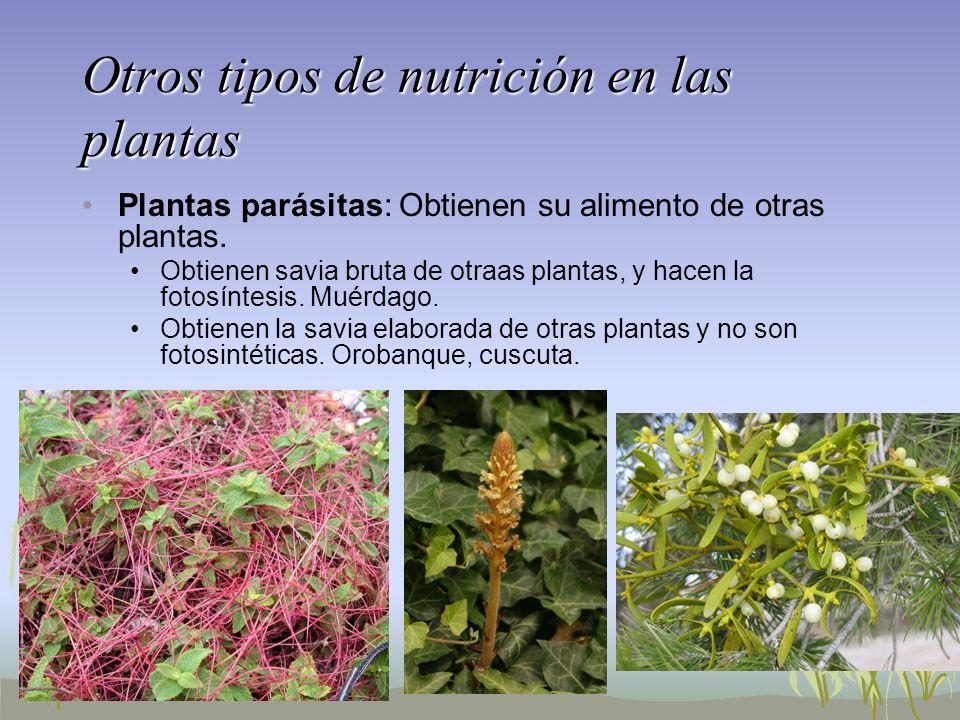 Otros tipos de nutrición en las plantas