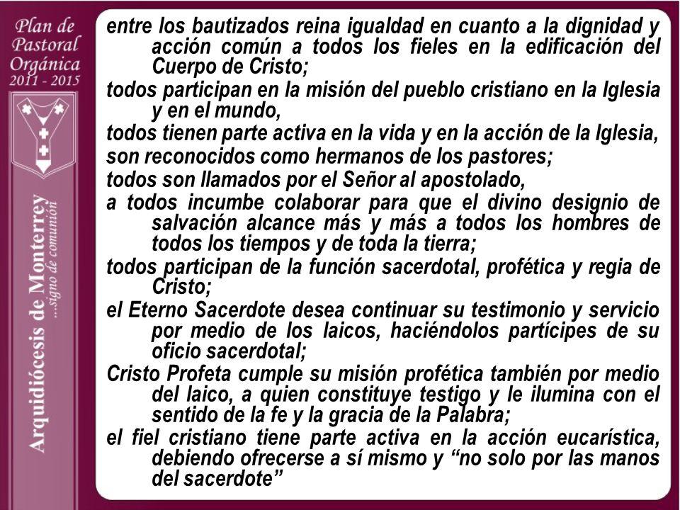 entre los bautizados reina igualdad en cuanto a la dignidad y acción común a todos los fieles en la edificación del Cuerpo de Cristo;