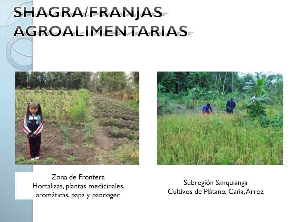SHAGRA/FRANJAS AGROALIMENTARIAS