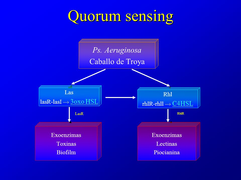 Quorum sensing LasR RhlR