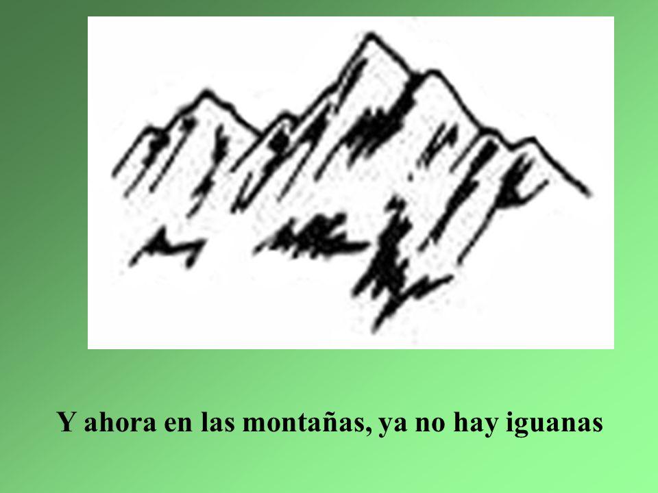 Y ahora en las montañas, ya no hay iguanas