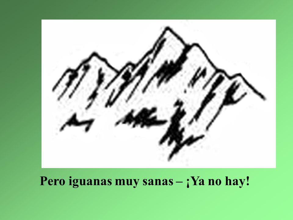 Pero iguanas muy sanas – ¡Ya no hay!