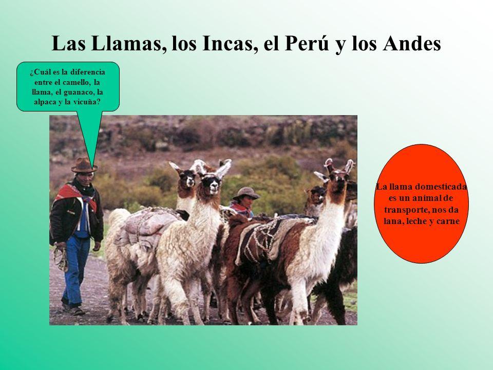 Las Llamas, los Incas, el Perú y los Andes