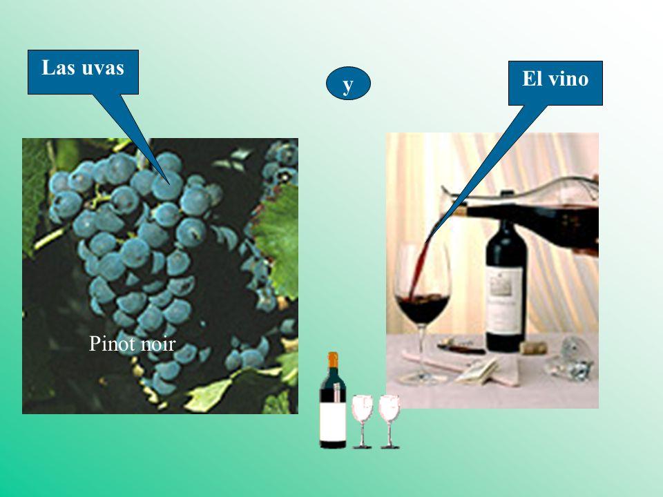 Las uvas El vino y Pinot noir