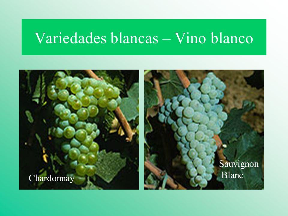 Variedades blancas – Vino blanco