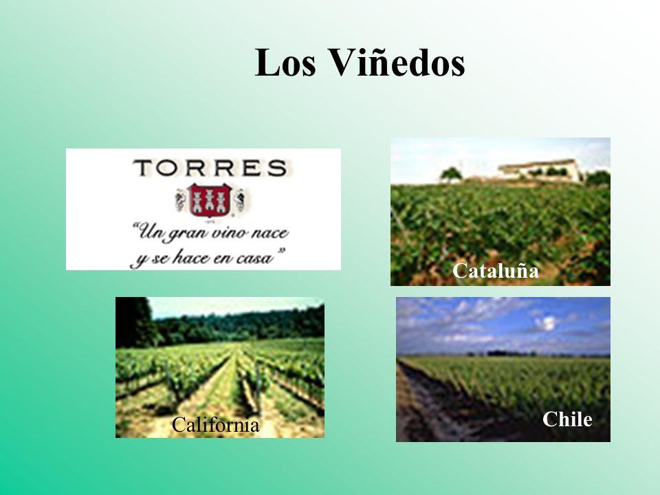 Los Viñedos Cataluña Chile California