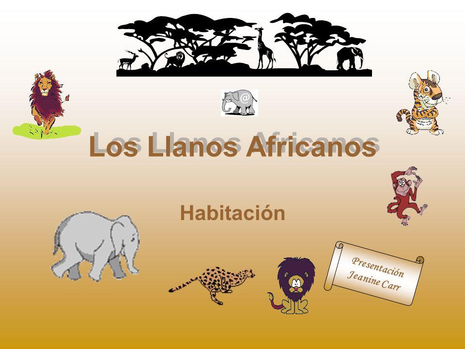Los Llanos Africanos Habitación Presentación Jeanine Carr
