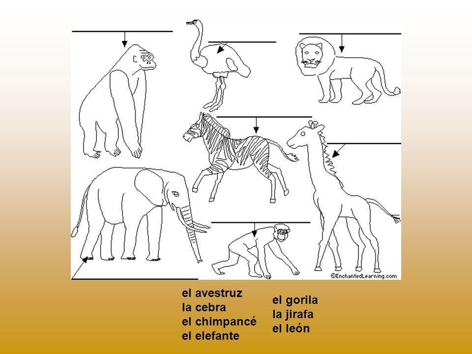 el avestruz la cebra el chimpancé el elefante