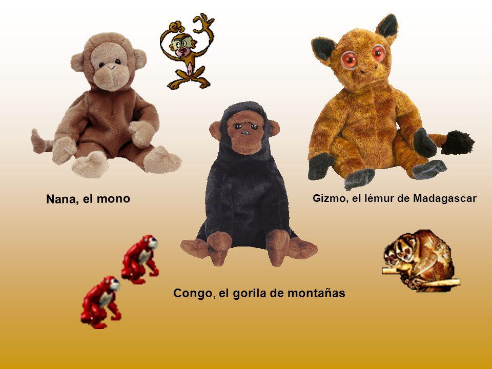 Congo, el gorila de montañas