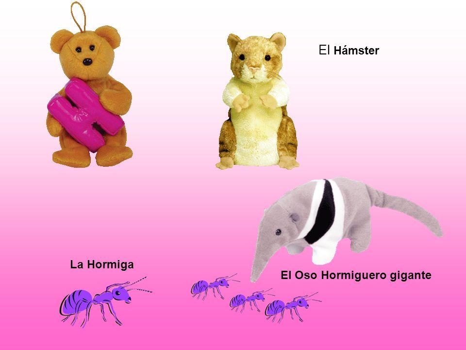 El Hámster La Hormiga El Oso Hormiguero gigante