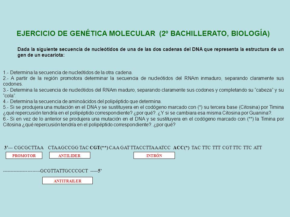 EJERCICIO DE GENÉTICA MOLECULAR (2º BACHILLERATO, BIOLOGÍA)