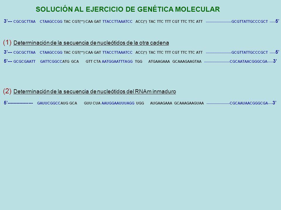 SOLUCIÓN AL EJERCICIO DE GENÉTICA MOLECULAR