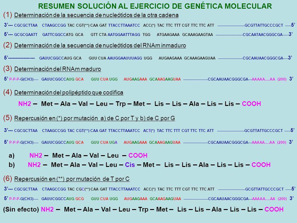 RESUMEN SOLUCIÓN AL EJERCICIO DE GENÉTICA MOLECULAR