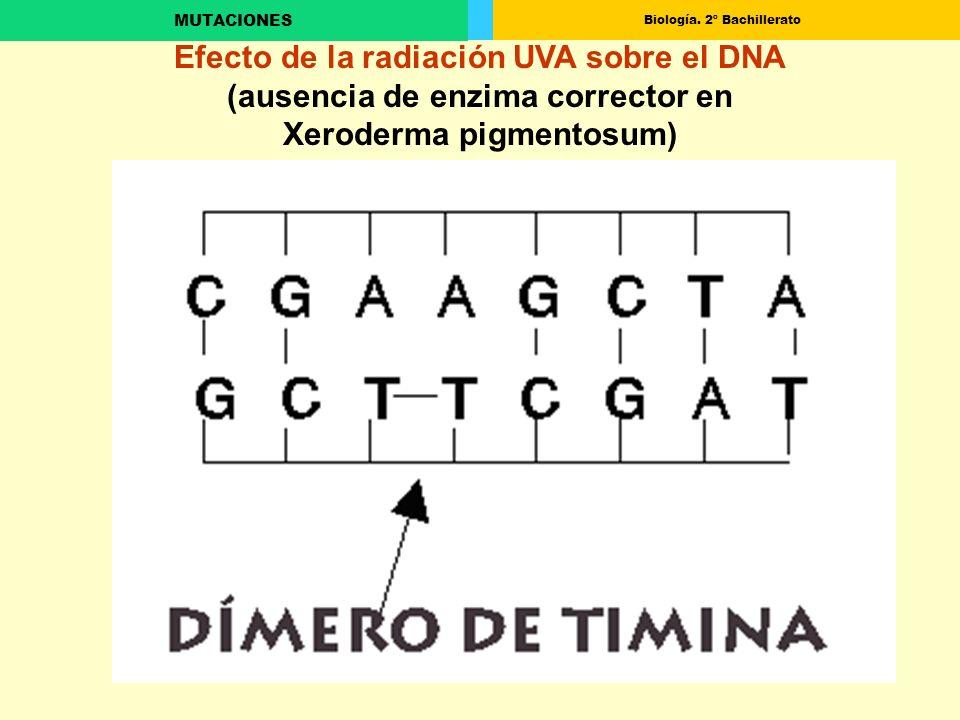 Efecto de la radiación UVA sobre el DNA (ausencia de enzima corrector en Xeroderma pigmentosum)