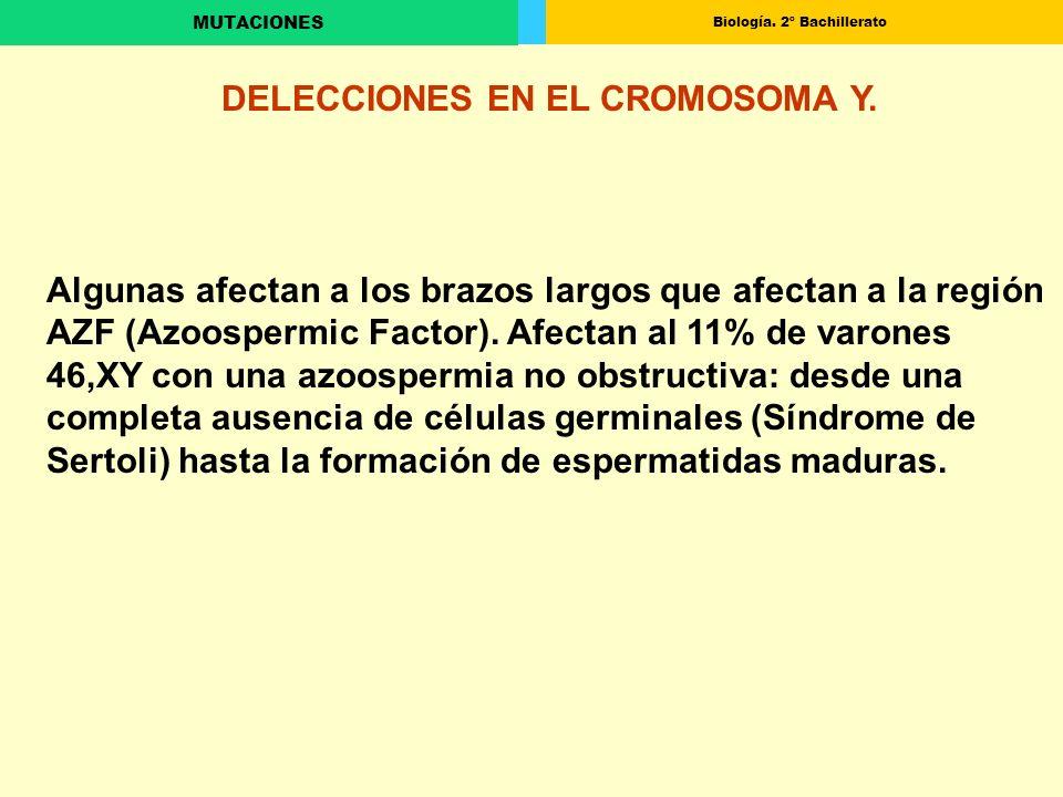 DELECCIONES EN EL CROMOSOMA Y.