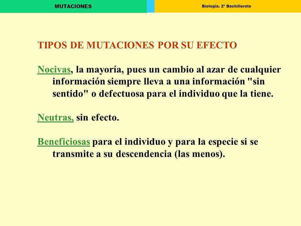 TIPOS DE MUTACIONES POR SU EFECTO