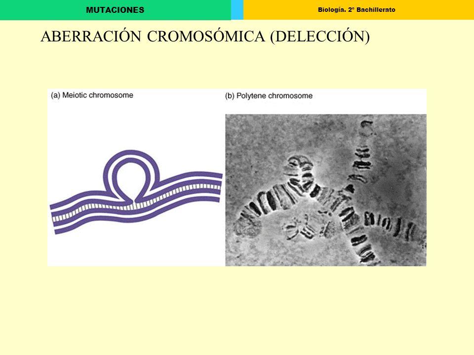 ABERRACIÓN CROMOSÓMICA (DELECCIÓN)