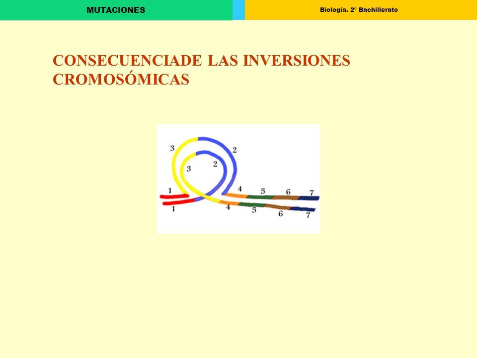 CONSECUENCIADE LAS INVERSIONES CROMOSÓMICAS