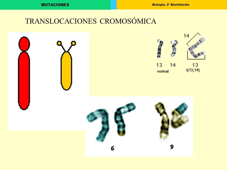 TRANSLOCACIONES CROMOSÓMICA