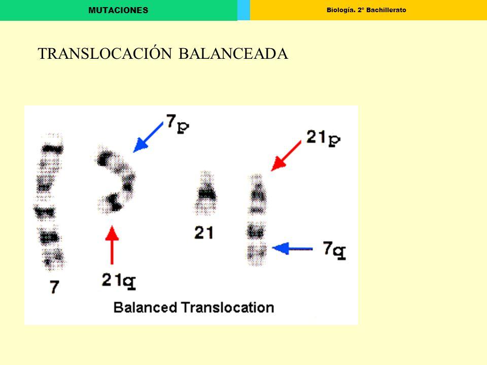 TRANSLOCACIÓN BALANCEADA