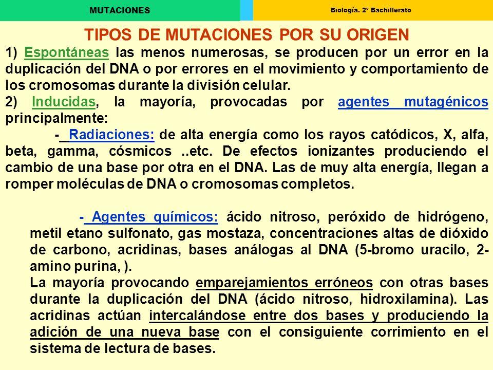TIPOS DE MUTACIONES POR SU ORIGEN