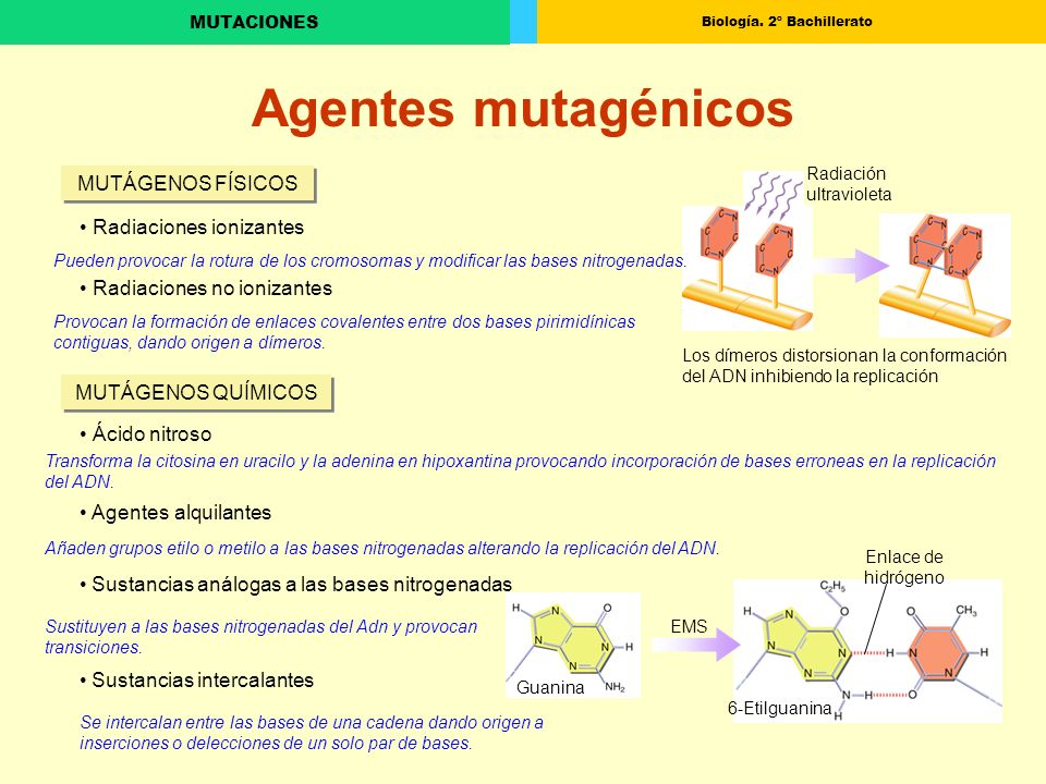 Agentes mutagénicos MUTÁGENOS FÍSICOS Radiaciones ionizantes