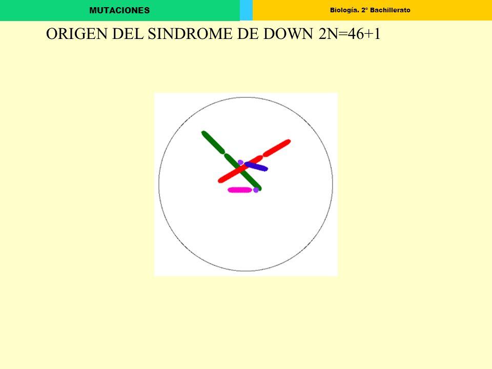 ORIGEN DEL SINDROME DE DOWN 2N=46+1
