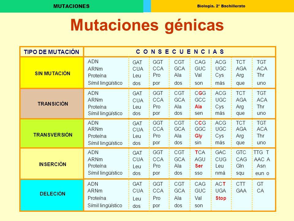 Mutaciones génicas TIPO DE MUTACIÓN C O N S E C U E N C I A S ADN GAT