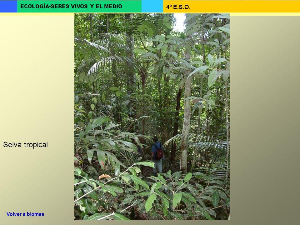 Selva tropical Volver a biomas