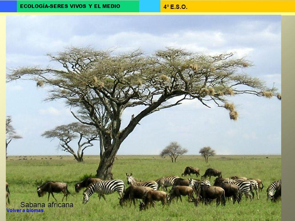 Sabana africana Volver a biomas