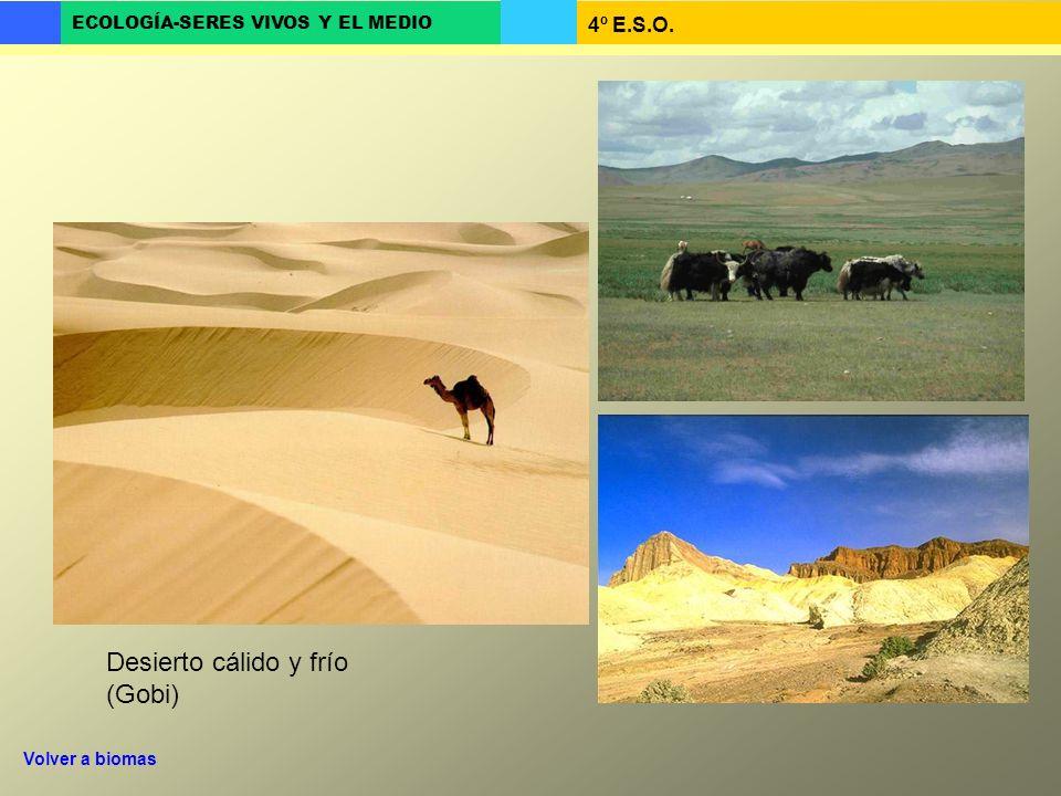 Desierto cálido y frío (Gobi)