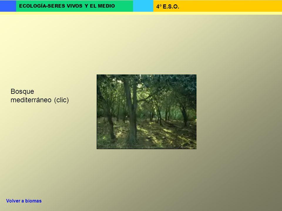 Bosque mediterráneo (clic)