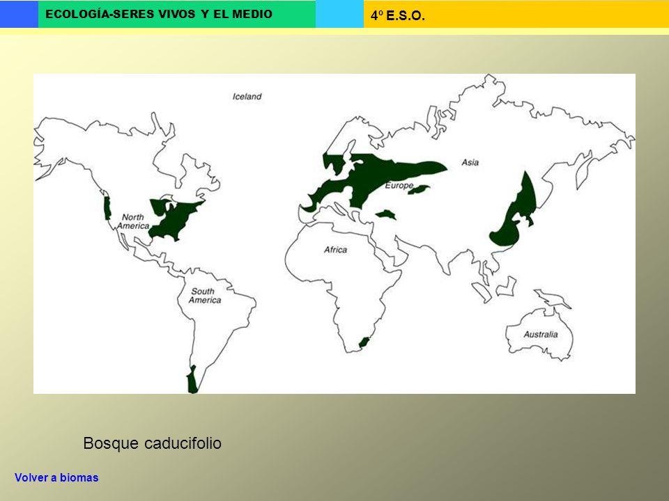 Bosque caducifolio Volver a biomas