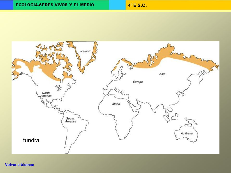 tundra Volver a biomas