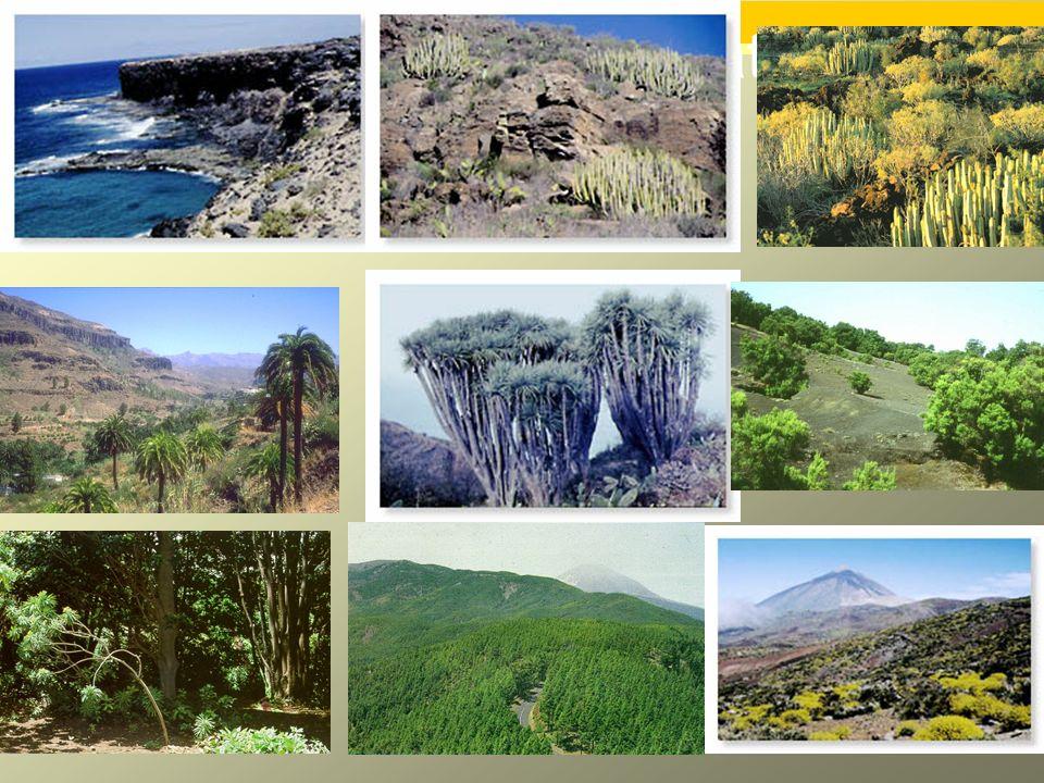 Fotos de pisos climáticos de vegetación.