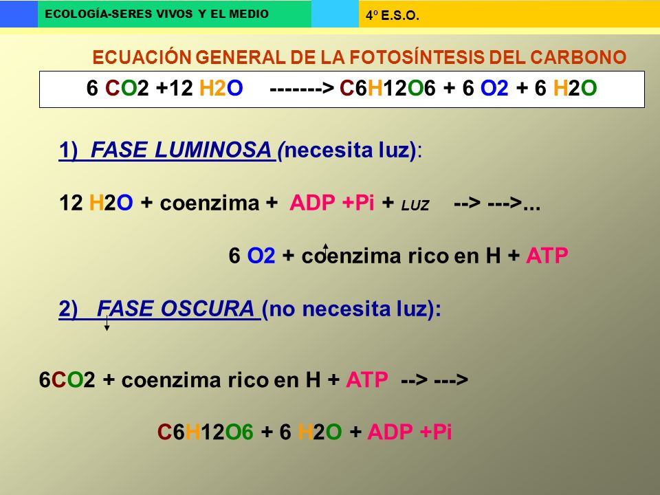 6 CO2 +12 H2O -------> C6H12O6 + 6 O2 + 6 H2O