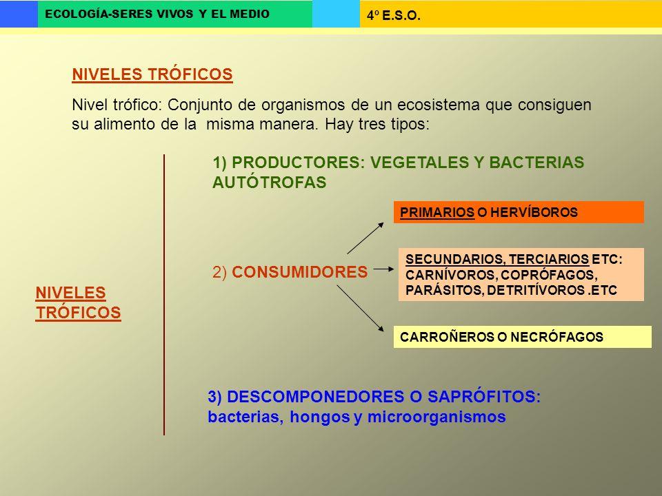 1) PRODUCTORES: VEGETALES Y BACTERIAS AUTÓTROFAS
