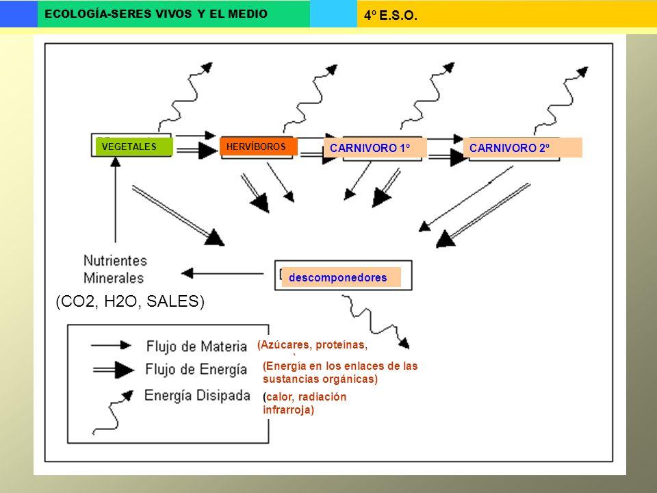 (CO2, H2O, SALES) CARNIVORO 1º CARNIVORO 2º descomponedores