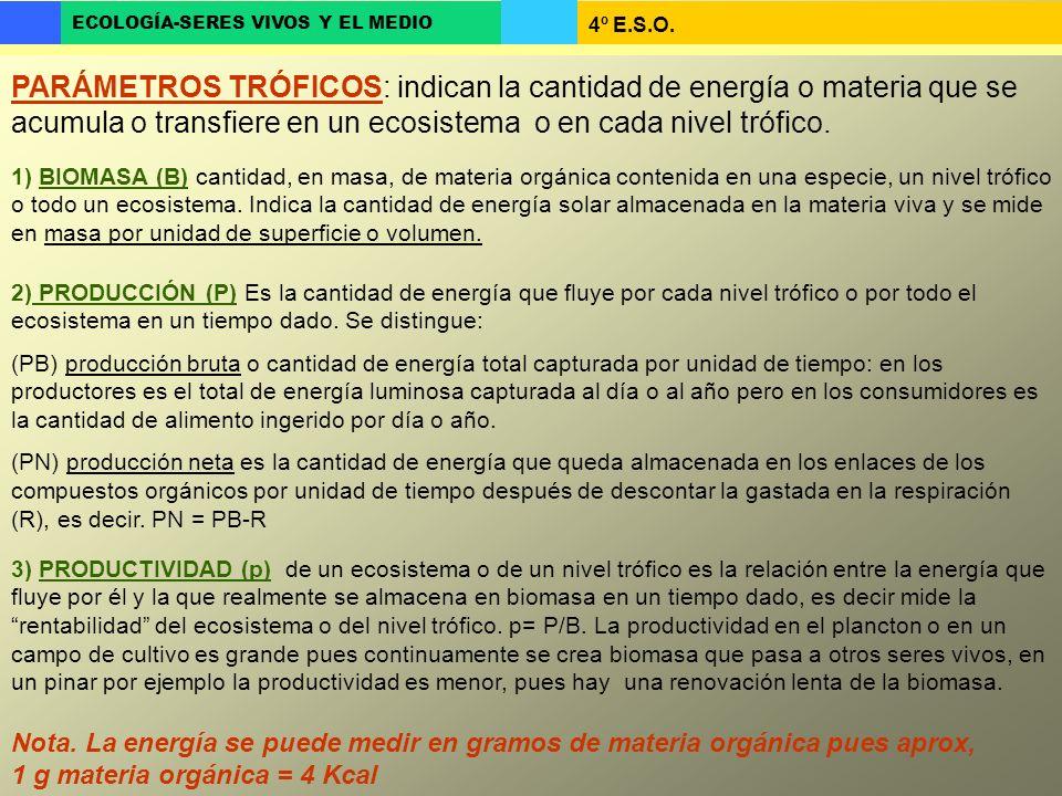 PARÁMETROS TRÓFICOS: indican la cantidad de energía o materia que se acumula o transfiere en un ecosistema o en cada nivel trófico.