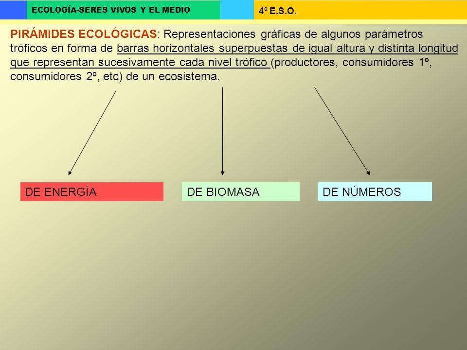 PIRÁMIDES ECOLÓGICAS: Representaciones gráficas de algunos parámetros tróficos en forma de barras horizontales superpuestas de igual altura y distinta longitud que representan sucesivamente cada nivel trófico (productores, consumidores 1º, consumidores 2º, etc) de un ecosistema.