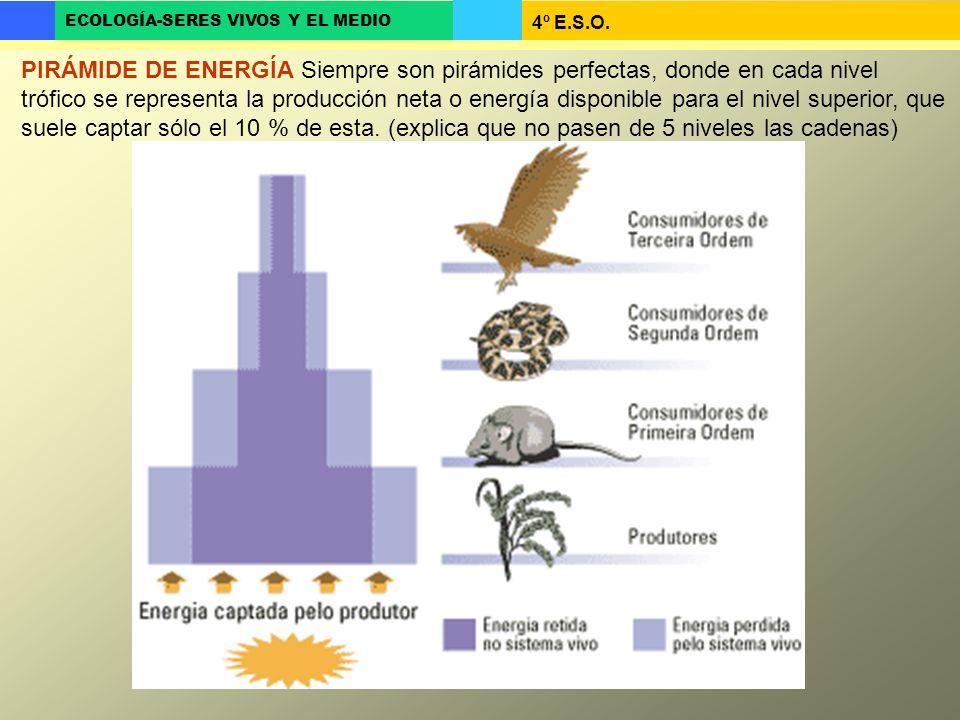 PIRÁMIDE DE ENERGÍA Siempre son pirámides perfectas, donde en cada nivel trófico se representa la producción neta o energía disponible para el nivel superior, que suele captar sólo el 10 % de esta.