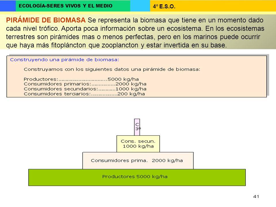 PIRÁMIDE DE BIOMASA Se representa la biomasa que tiene en un momento dado cada nivel trófico.