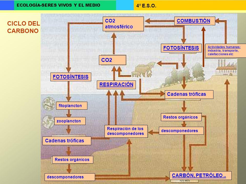 CICLO DEL CARBONO CO2 CO2 atmosférico COMBUSTIÓN FOTOSÍNTESIS