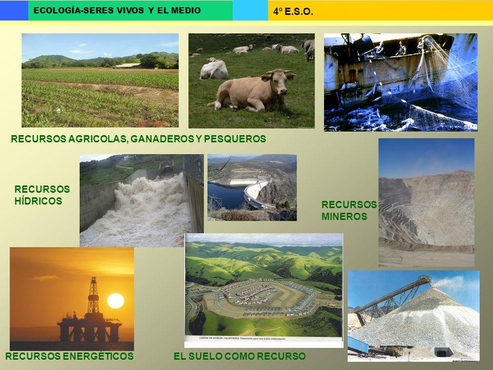 RECURSOS AGRICOLAS, GANADEROS Y PESQUEROS