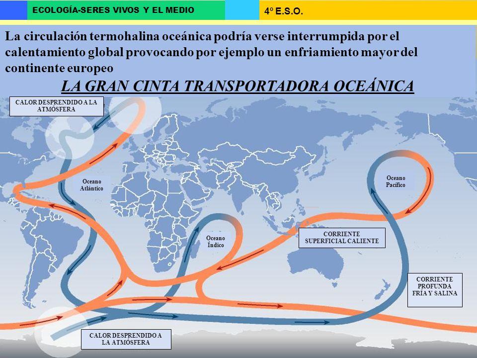 LA GRAN CINTA TRANSPORTADORA OCEÁNICA