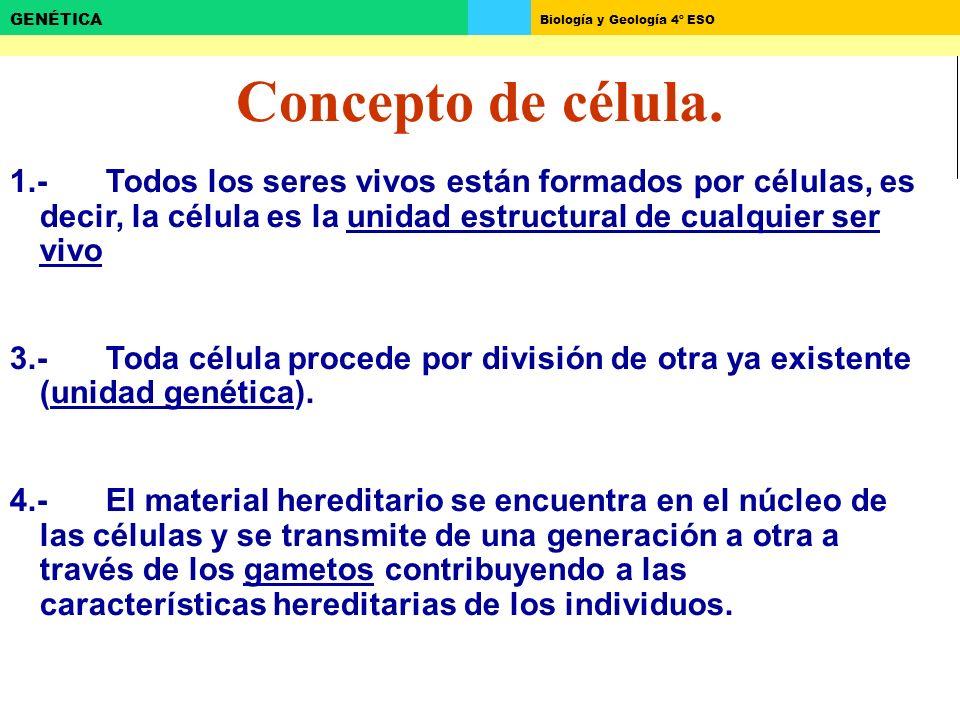 Concepto de célula. 1.- Todos los seres vivos están formados por células, es decir, la célula es la unidad estructural de cualquier ser vivo.